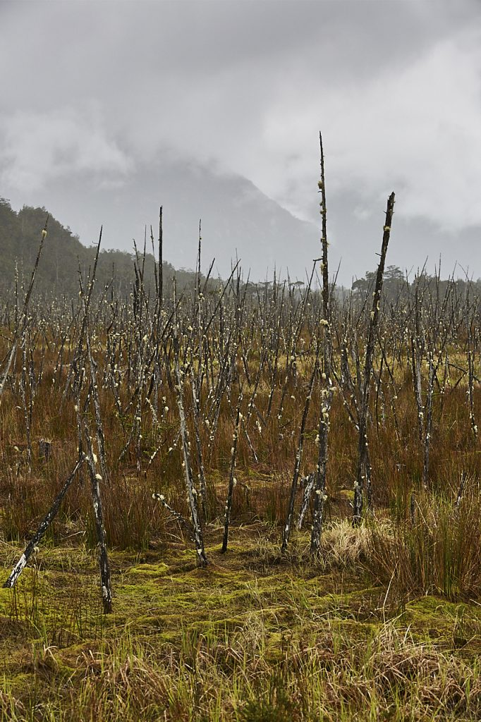 Patagonian landscape marsh
