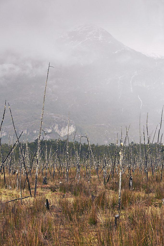 Patagonian landscape marsh 1