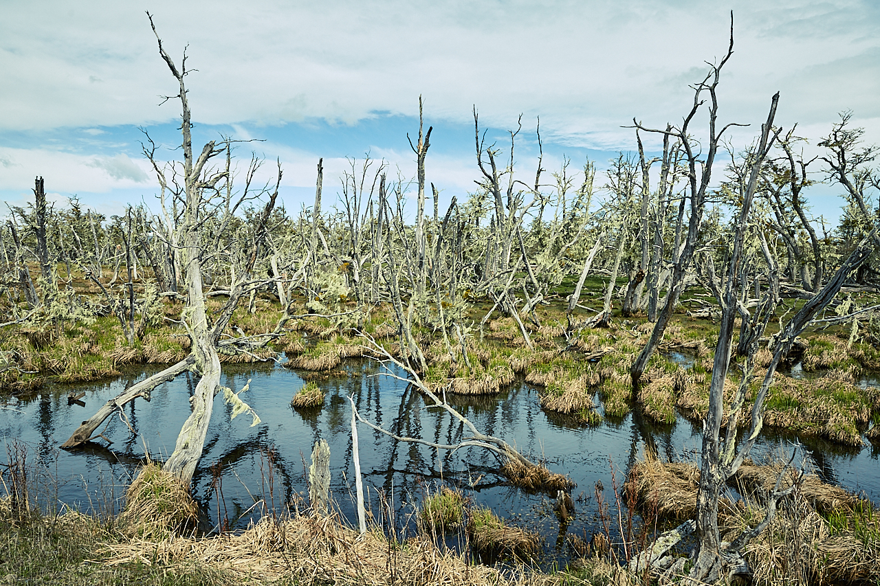 Patagonian swamp with Trees